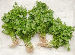 Contraindicaciones del cilantro